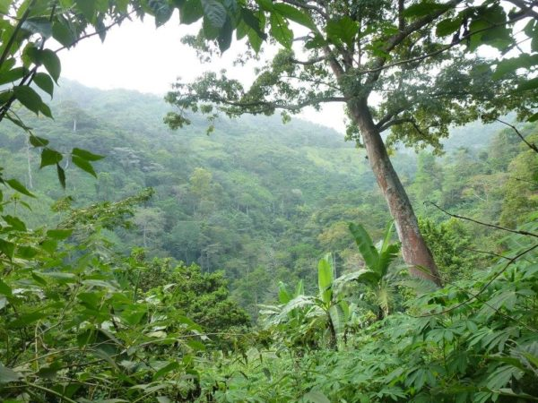 paysage togo kpalime